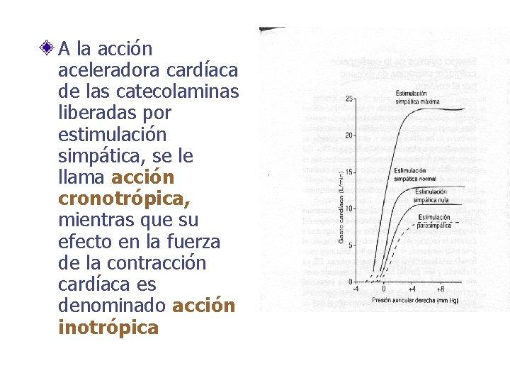 A la acción aceleradora cardíaca de las catecolaminas liberadas por estimulación simpática, se le