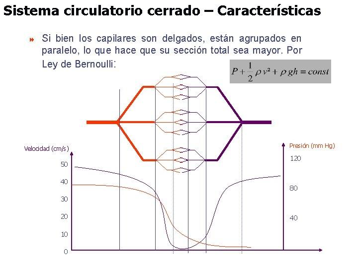 Sistema circulatorio cerrado – Características 8 Si bien los capilares son delgados, están agrupados