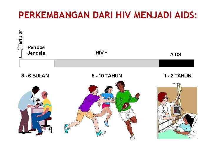Tertular PERKEMBANGAN DARI HIV MENJADI AIDS: Periode Jendela 3 - 6 BULAN HIV +