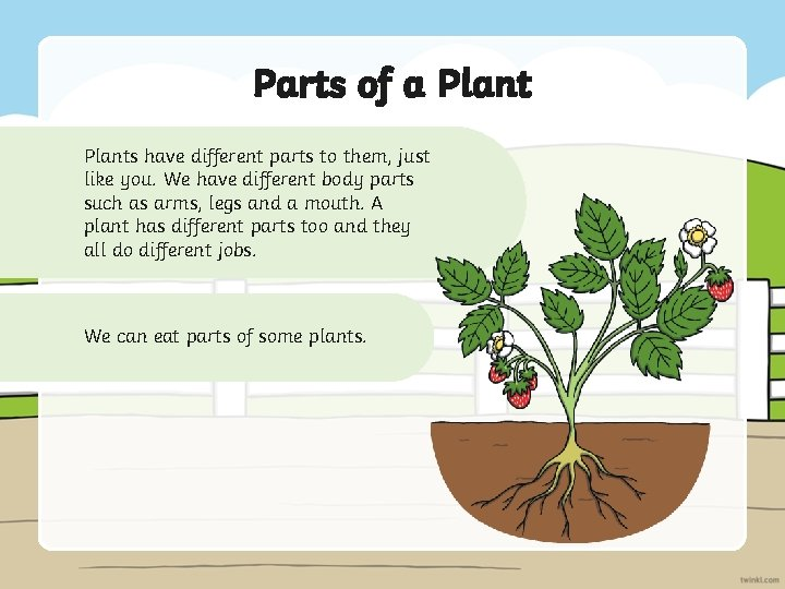 Parts of a Plants have different parts to them, just like you. We have