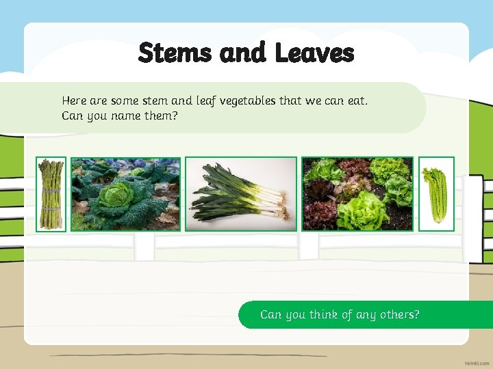 Stems and Leaves Here are some stem and leaf vegetables that we can eat.