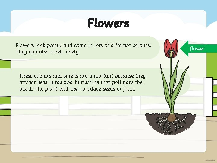 Flowers look pretty and come in lots of different colours. They can also smell