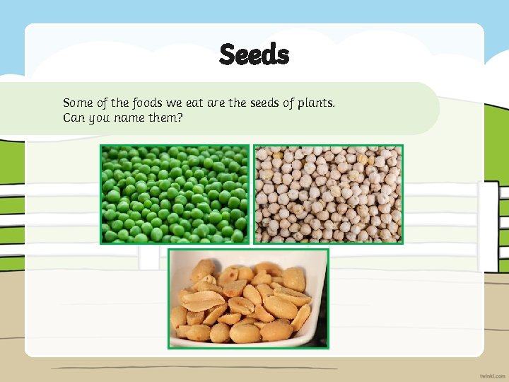 Seeds Some of the foods we eat are the seeds of plants. Can you