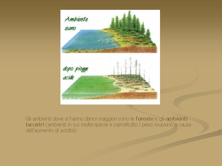 Gli ambienti dove si hanno danni maggiori sono le foreste e gli ambienti lacustri