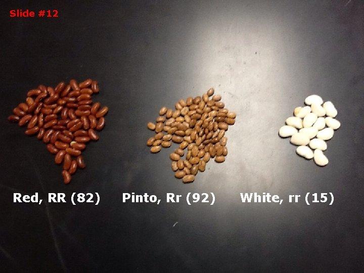 Slide #12 Red, RR (82) Pinto, Rr (92) White, rr (15)
