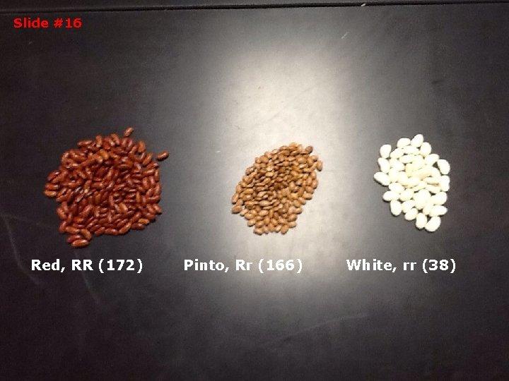 Slide #16 Red, RR (172) Pinto, Rr (166) White, rr (38)