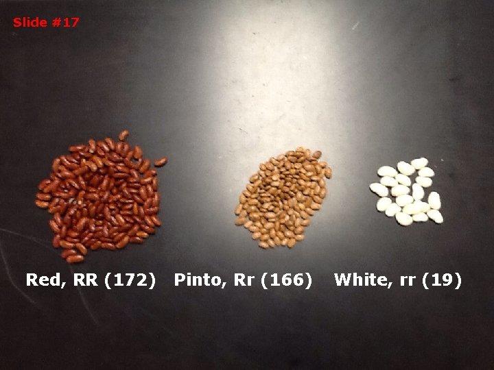 Slide #17 Red, RR (172) Pinto, Rr (166) White, rr (19)