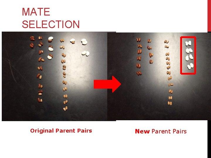 MATE SELECTION Original Parent Pairs New Parent Pairs