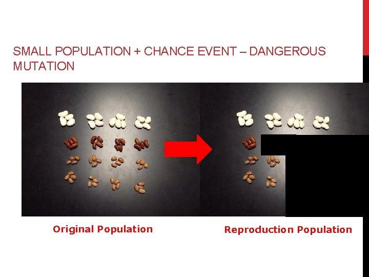 SMALL POPULATION + CHANCE EVENT – DANGEROUS MUTATION Original Population Reproduction Population