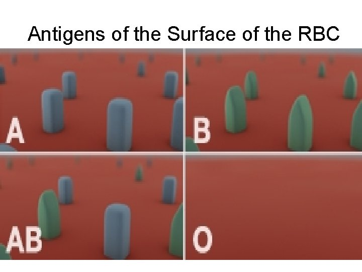 Antigens of the Surface of the RBC