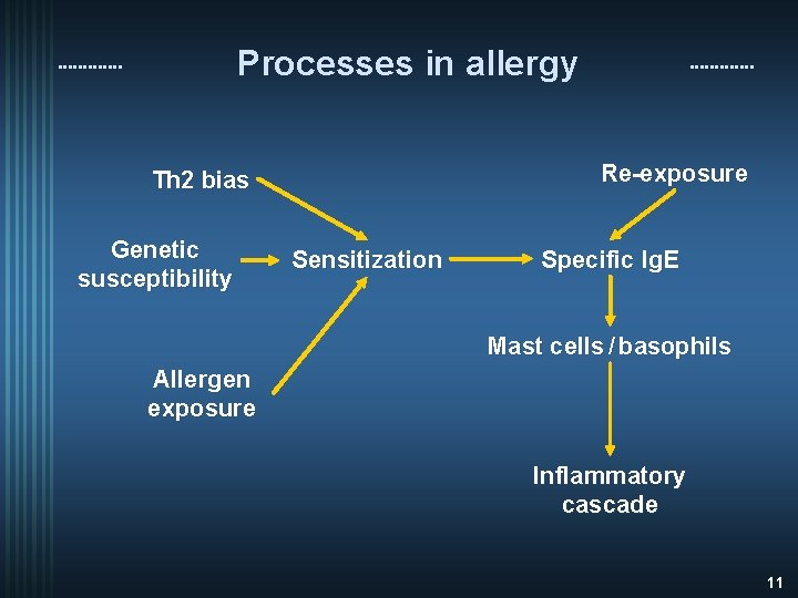 Processes in allergy Re-exposure Th 2 bias Genetic susceptibility Sensitization Specific Ig. E Mast