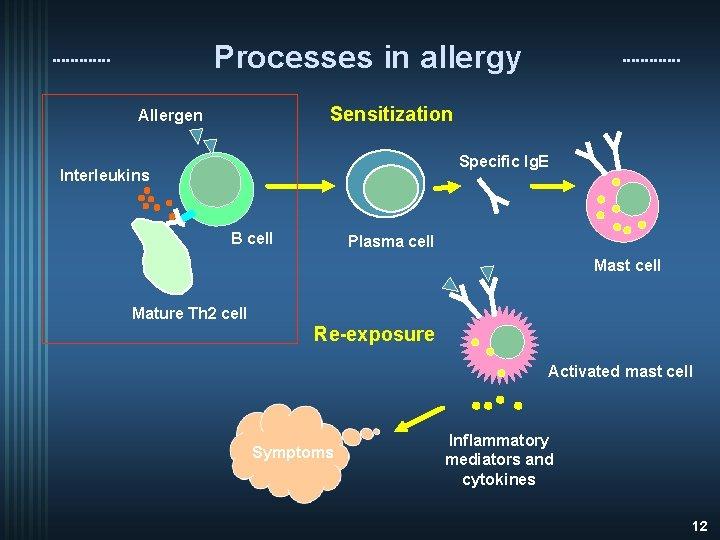 Processes in allergy Sensitization Allergen Specific Ig. E Interleukins B cell Plasma cell Mast