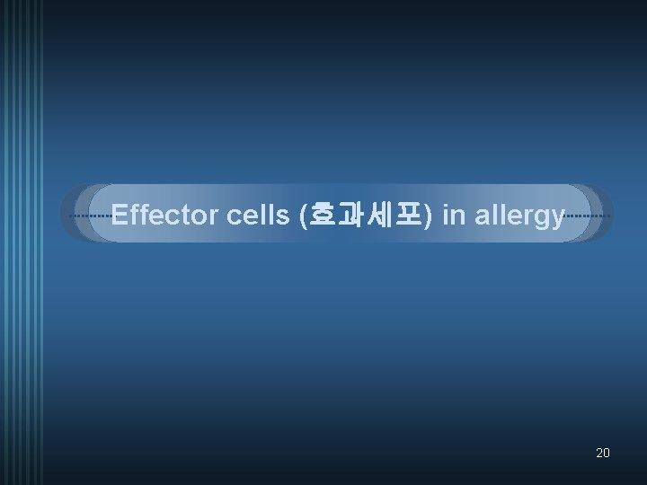 Effector cells (효과세포) in allergy 20