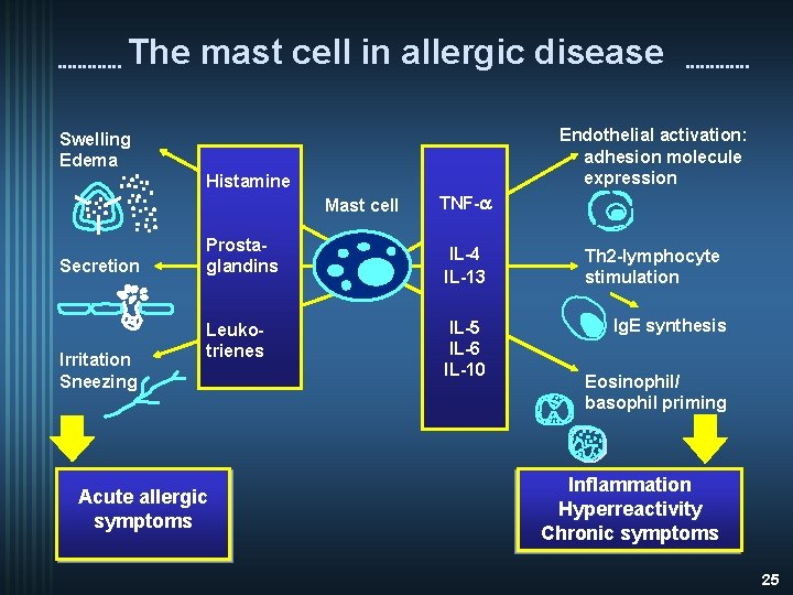 The mast cell in allergic disease Endothelial activation: adhesion molecule expression Swelling Edema Histamine