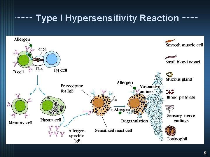 Type I Hypersensitivity Reaction 9