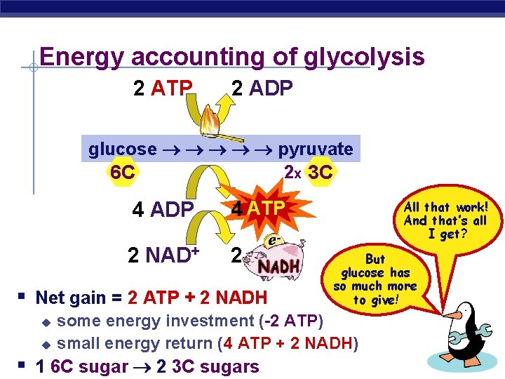 Energy accounting of glycolysis 2 ATP 2 ADP glucose pyruvate 2 x 3 C