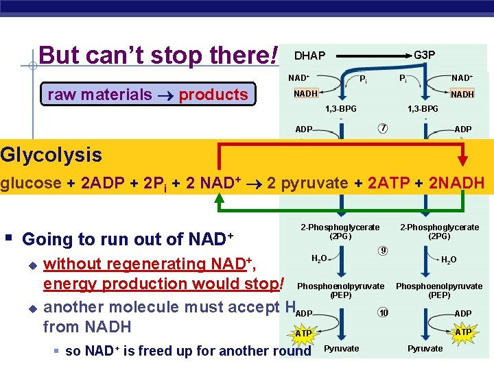 But can't stop there! G 3 P DHAP NAD+ raw materials products Pi +