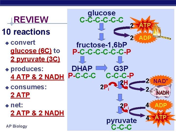 REVIEW 10 reactions glucose C-C-C-C 2 ATP 2 ADP convert fructose-1, 6 b. P