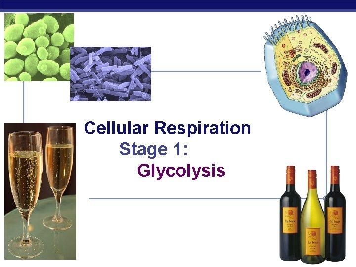 Cellular Respiration Stage 1: Glycolysis AP Biology 2007 -2008
