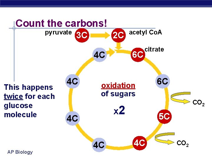 Count the carbons! pyruvate 3 C 2 C 6 C 4 C This happens