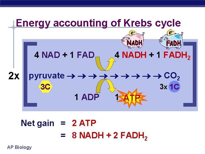 Energy accounting of Krebs cycle 4 NAD + 1 FAD 4 NADH + 1