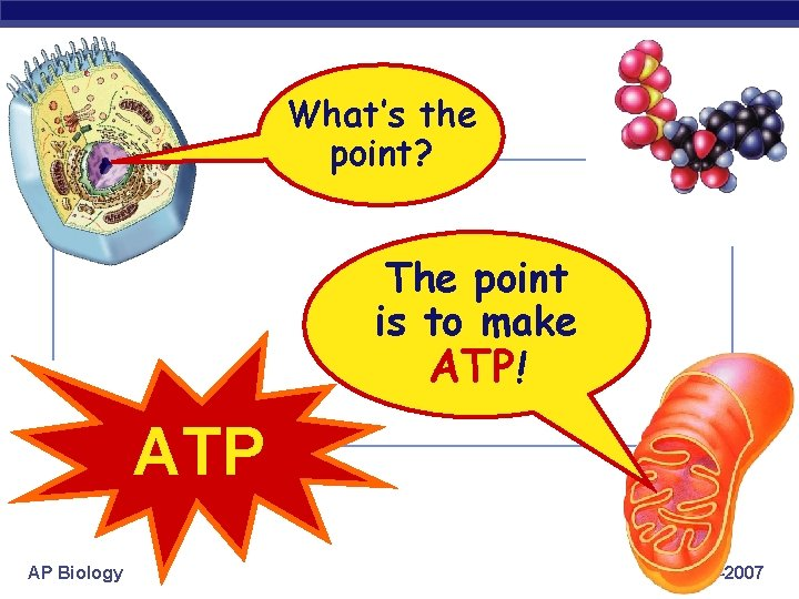 What's the point? The point is to make ATP! ATP AP Biology 2006 -2007