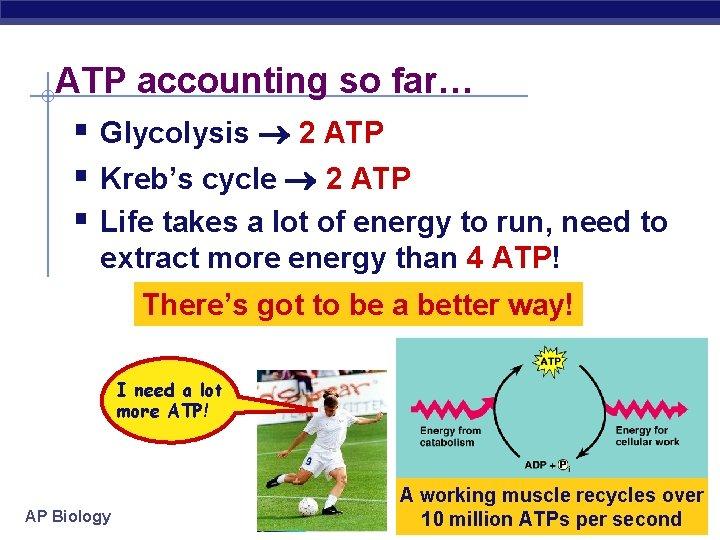 ATP accounting so far… § Glycolysis 2 ATP § Kreb's cycle 2 ATP §