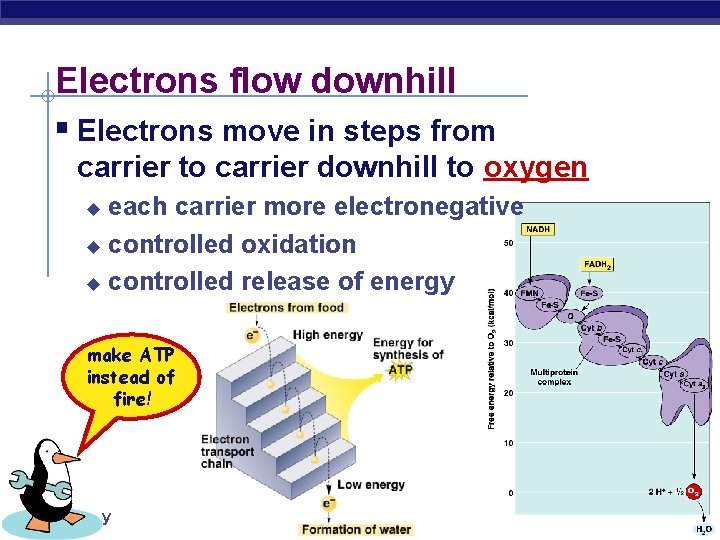 Electrons flow downhill § Electrons move in steps from carrier to carrier downhill to