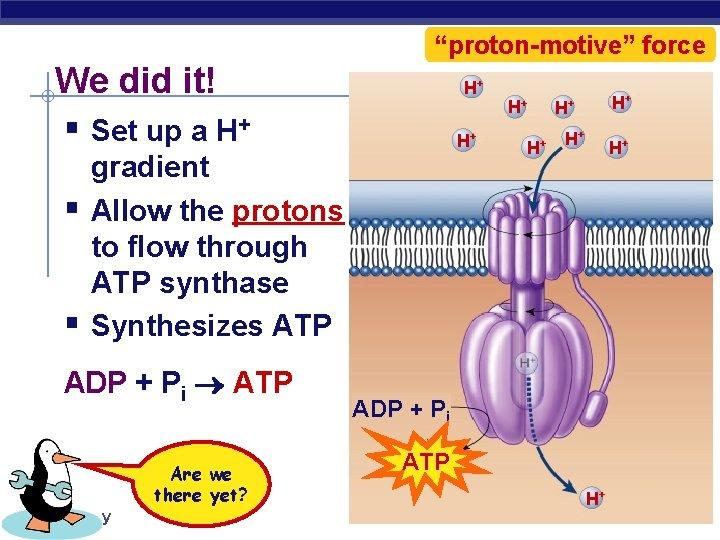 """""""proton-motive"""" force We did it! § Set up a H+ § § H+ H+"""