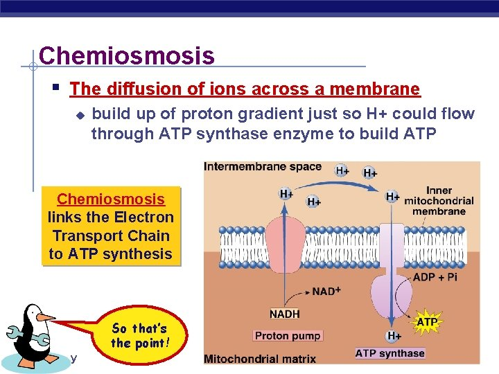 Chemiosmosis § The diffusion of ions across a membrane u build up of proton