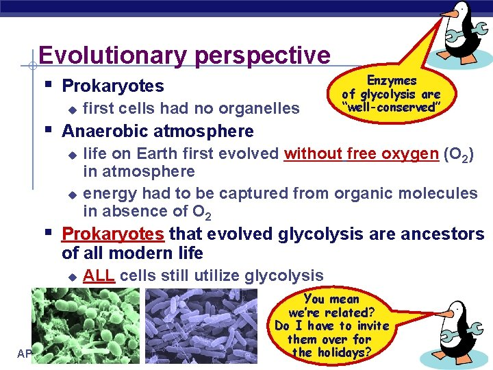 Evolutionary perspective § Prokaryotes u first cells had no organelles Enzymes of glycolysis are