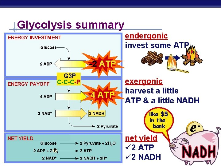 Glycolysis summary endergonic invest some ATP ENERGY INVESTMENT -2 ATP G 3 P ENERGY
