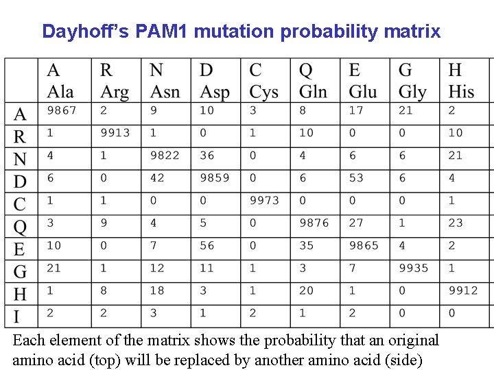 Dayhoff's PAM 1 mutation probability matrix Each element of the matrix shows the probability