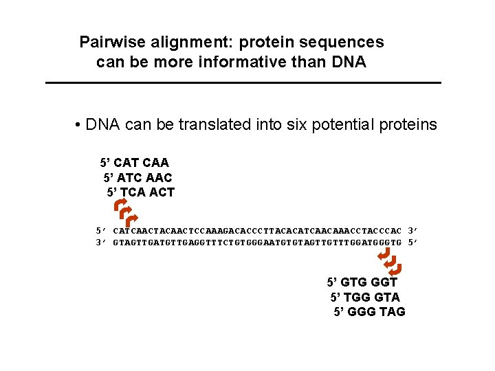 Pairwise alignment: protein sequences can be more informative than DNA • DNA can be