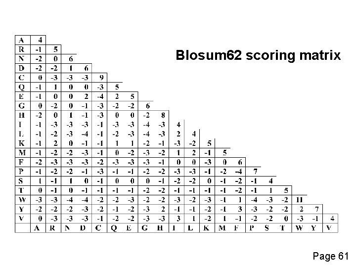Blosum 62 scoring matrix Page 61