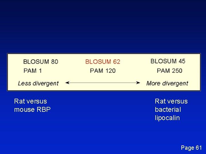 Rat versus mouse RBP Rat versus bacterial lipocalin Page 61