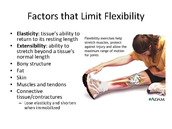 Factors that Limit Flexibility • Elasticity: tissue's ability to return to its resting length