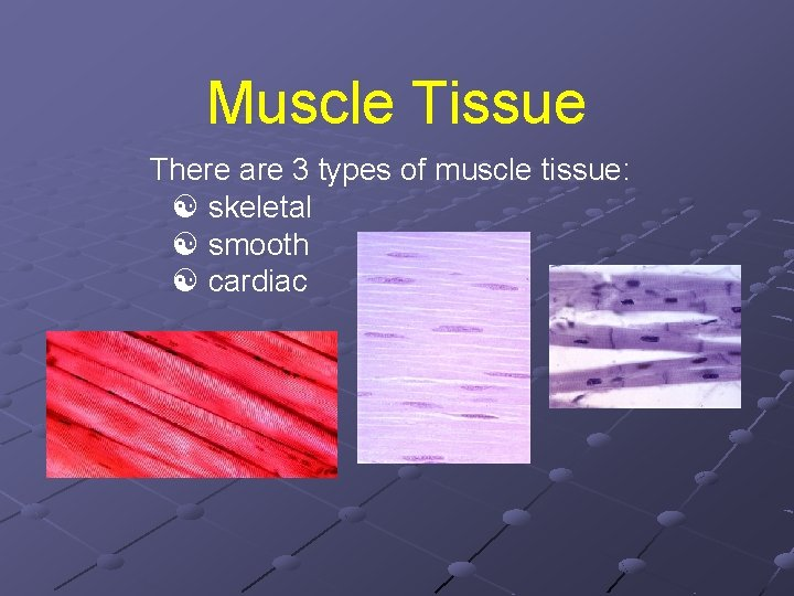 Muscle Tissue There are 3 types of muscle tissue: skeletal smooth cardiac