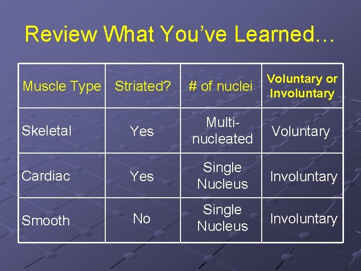 Review What You've Learned… Muscle Type Striated? # of nuclei Voluntary or Involuntary Skeletal