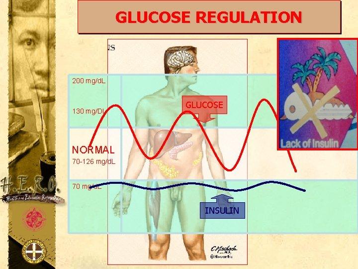 GLUCOSE REGULATION 200 mg/d. L 130 mg/Dl GLUCOSE NORMAL 70 -126 mg/d. L 70