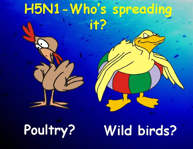 H 5 N 1 -Who's spreading it? Poultry? Wild birds?