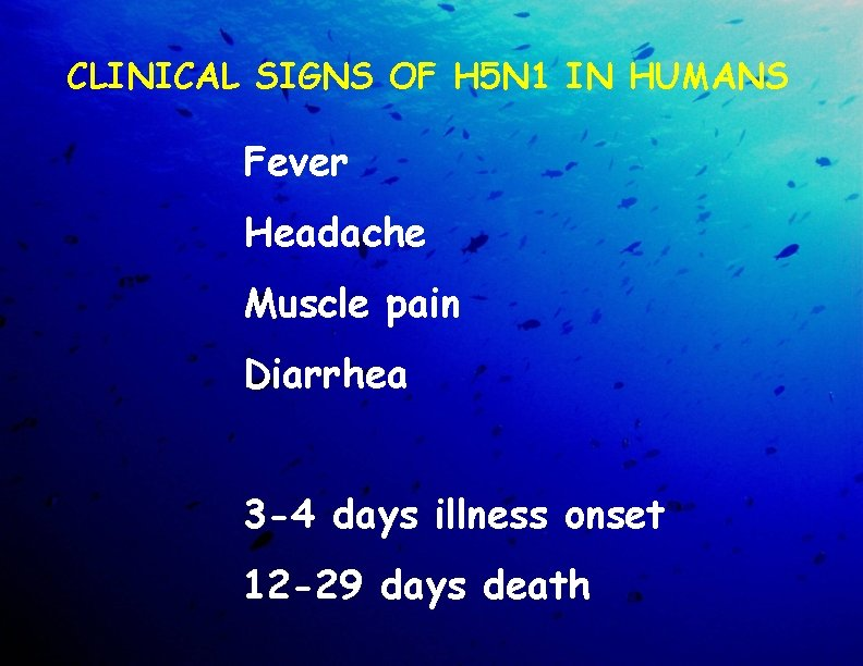 CLINICAL SIGNS OF H 5 N 1 IN HUMANS Fever Headache Muscle pain Diarrhea