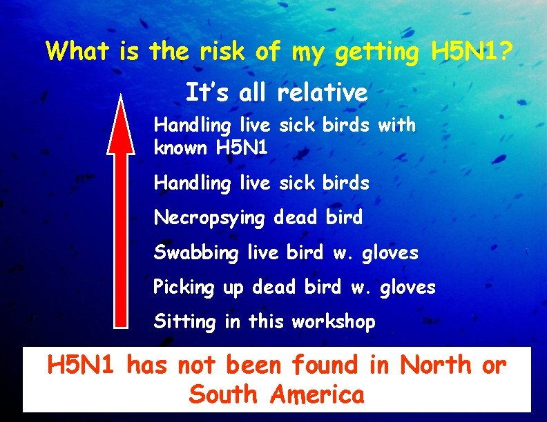 What is the risk of my getting H 5 N 1? It's all relative