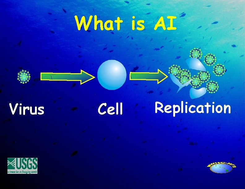What is AI Virus Cell Replication