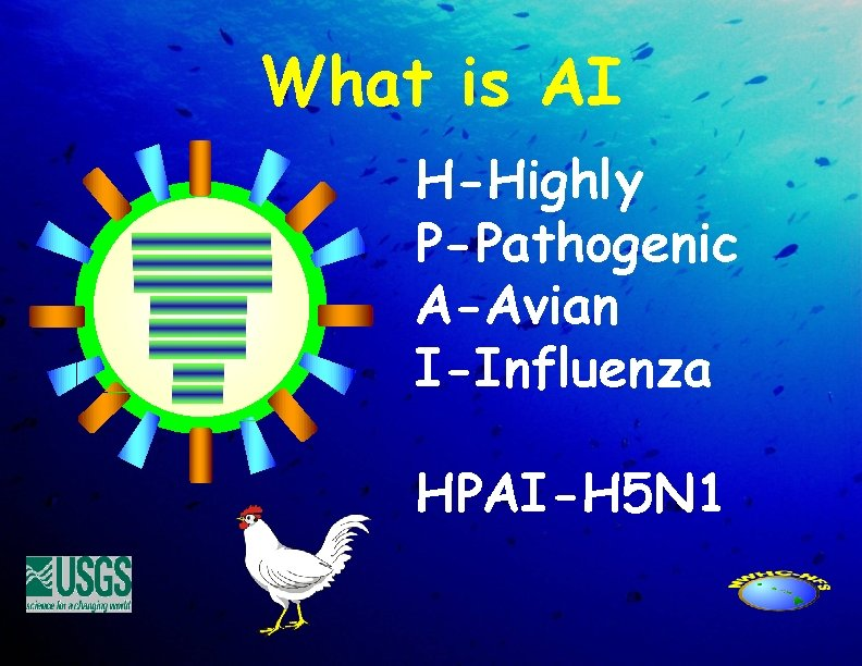 What is AI H-Highly P-Pathogenic A-Avian I-Influenza HPAI-H 5 N 1