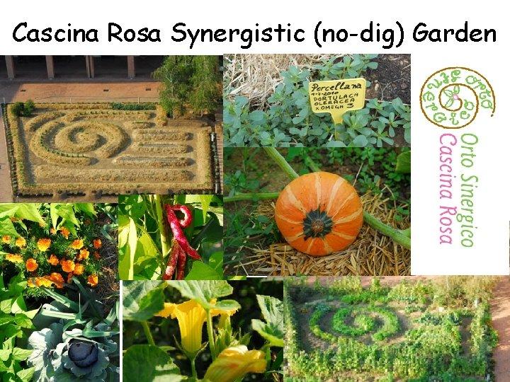 Cascina Rosa Synergistic (no-dig) Garden