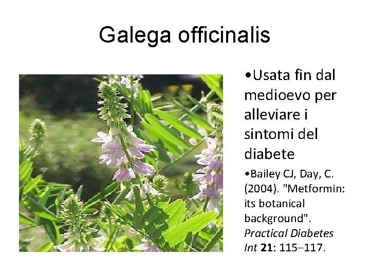 Galega officinalis • Usata fin dal medioevo per alleviare i sintomi del diabete •