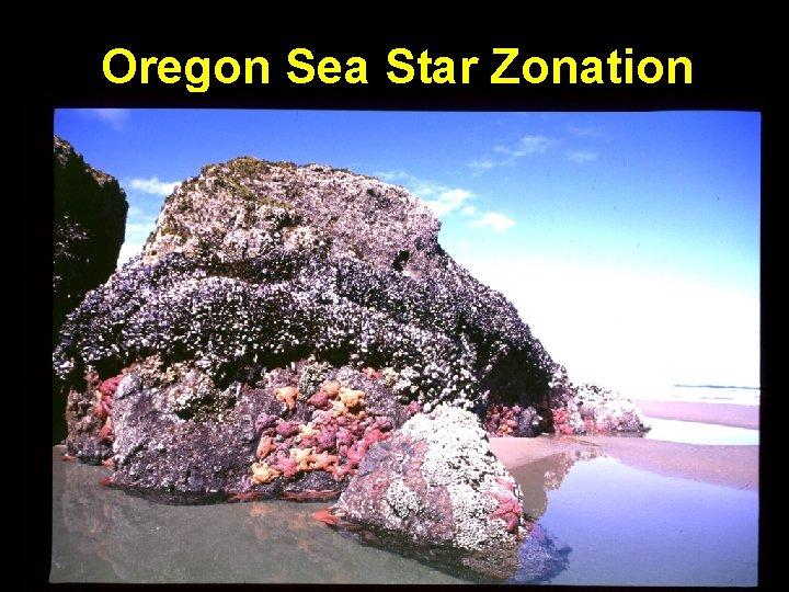 Oregon Sea Star Zonation