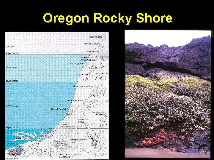 Oregon Rocky Shore