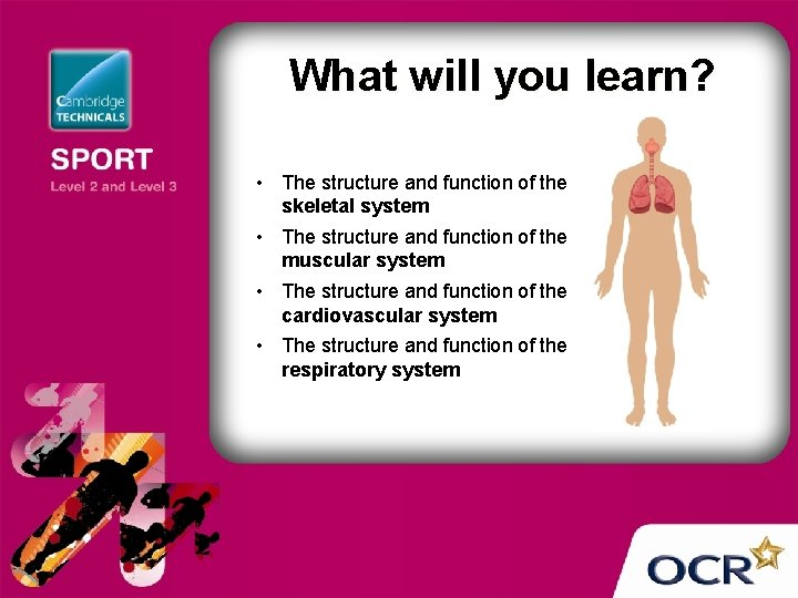 What will you learn? • The structure and function of the skeletal system •